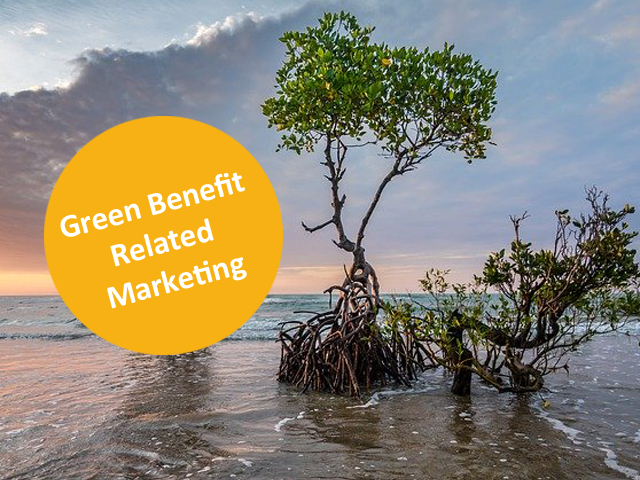 mangrove tree at the beach, sunset light