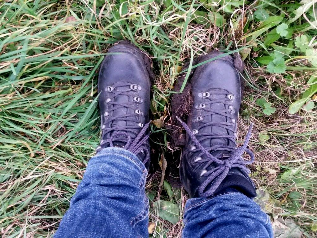Dark blue hiking shoes on tree plantation green field