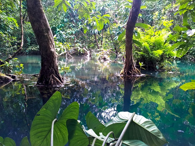 close-up of plants and trunks in the jungle, growing in clear water